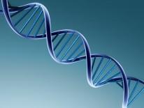 Variação do DNA humano se aproxima da linha temporal bíblica