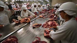 Nestlê estaria vendendo carne de cavalo